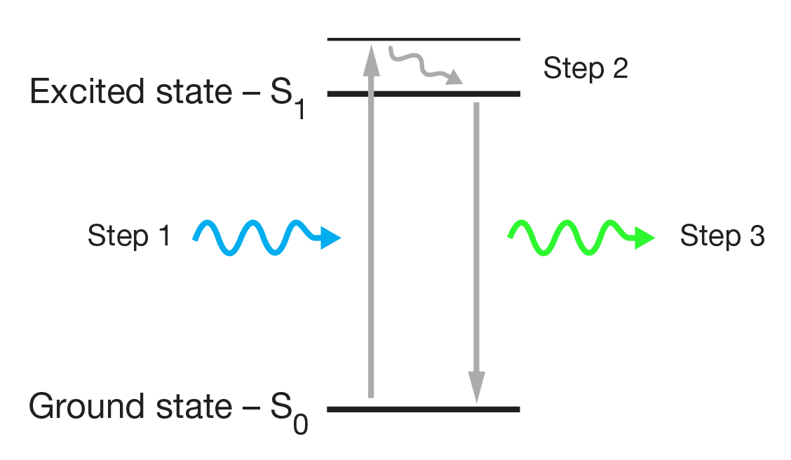 figure 1: a jablonski diagram demonstrating light exciting electrons within  a fluorophore to a higher energy level, and the electrons returning to  their