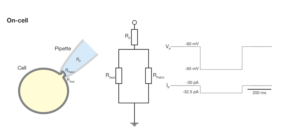 Schematic Diagram Parallel Circuit | Understanding The Cell As An Electrical Circuit
