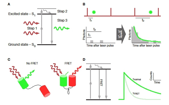 Scimethods using a scientifica multiphoton slicescope for a jablonksi diagram showing the electronic processes during two photon excited fluorescence step 1 is the promotion of an electron from the ground state ccuart Image collections