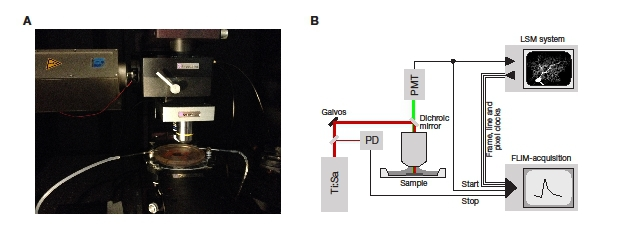 SciMethods: Using a Scientifica SliceScope for Fluorescence